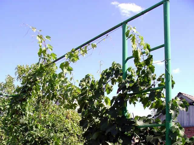 Арки для винограда своими руками видео